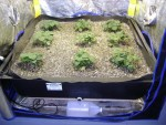 "Smart Pot Flood Tray Liner 4'x4'x12"" (724769)"
